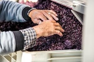 azienda agricola fiore vinificazione
